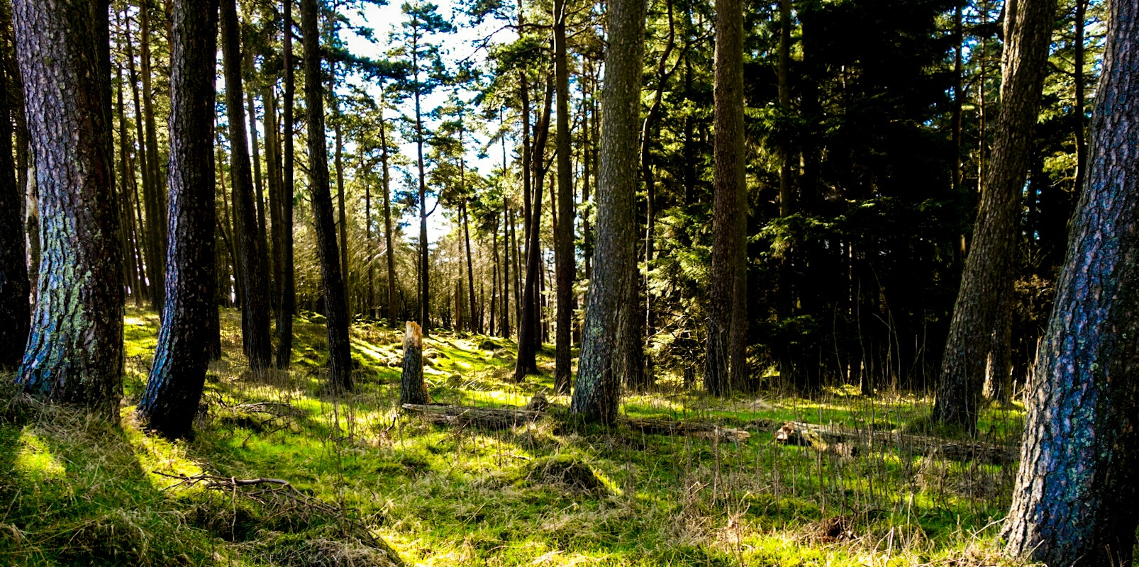 The Future Of Forestry In Scotland Scottish Government